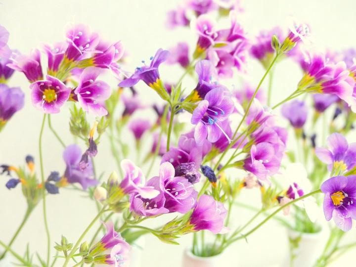purple flowers beautiful