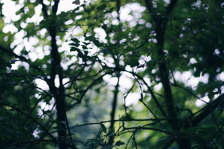 bladeren boom