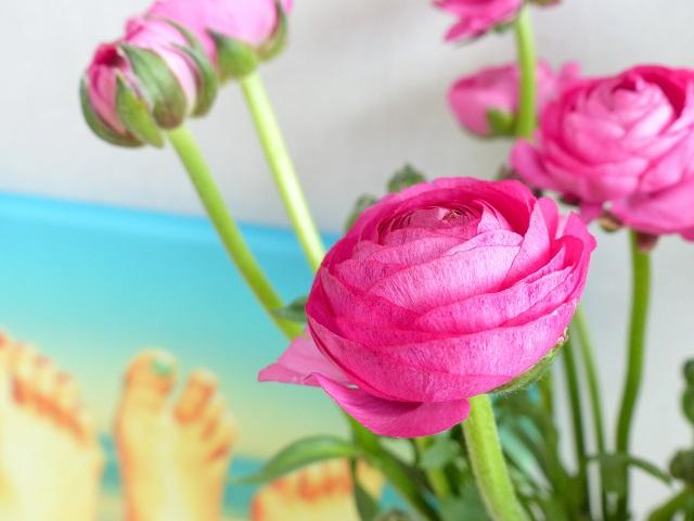anemonen bloemen
