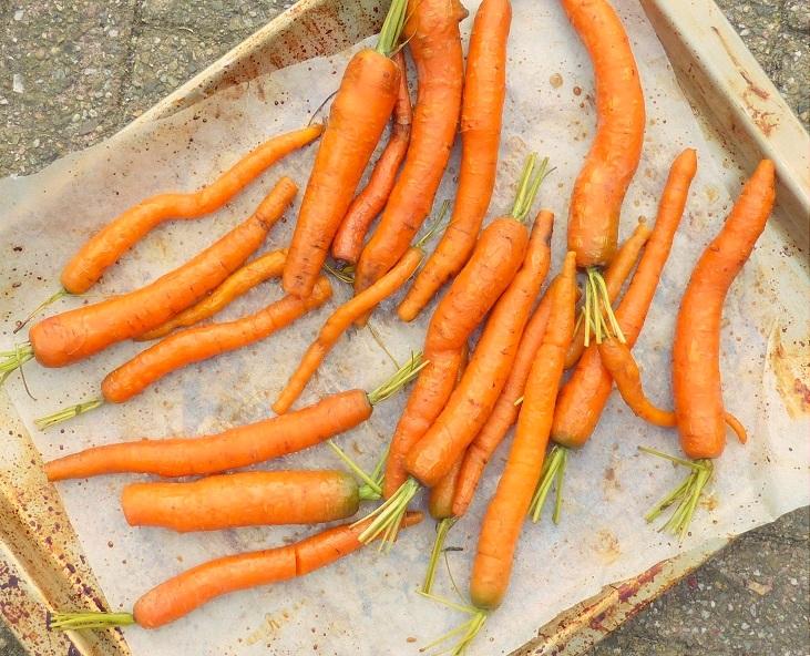 recept geroosterde worteltjes honing balsamico