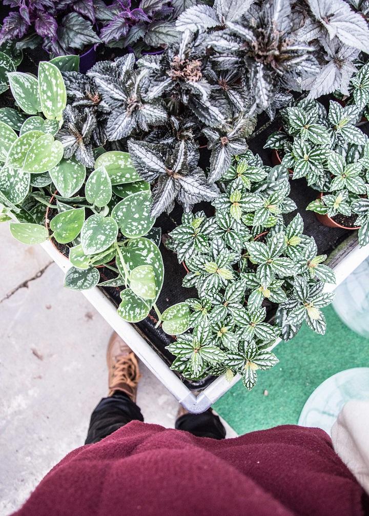 plantjes voor binnen