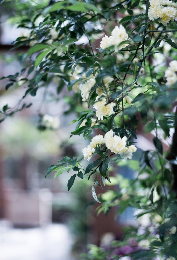 bloemen hortus