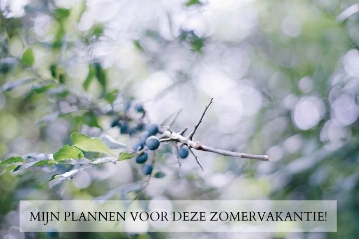 PLANNEN ZOMER