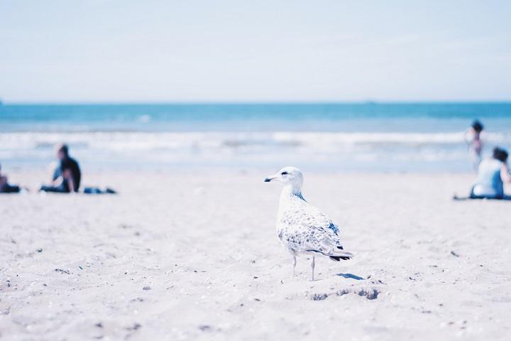strand meeuw