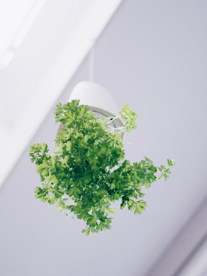 hangende-plantenpot